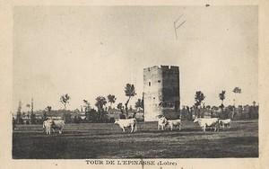 le-donjon-de-lespinasse-11